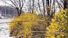 [헤럴드 포토]봄과 겨울의 공존