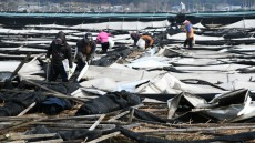 4월 폭설로 경북 북부 지역에 농장시설 파손등 크고 작은 피해 잇따라