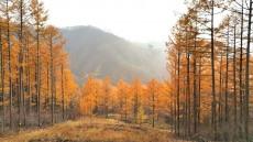 영주국유림관리소, 한국산림인증(KFCC) 취득 추진...기후변화대응,불법벌채 목재 근절