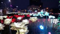 포항 영일대 겨울 밤바다 LED장미꽃 활짝...연말연시 낭만선사
