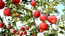 의성농업인 자연재해 걱정없이 농사짓는다...재해보험 90%지원