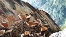 안동대,히말라야 꿀벌보호 나선다..네팔 꿀벌 과학연구소와  양봉산업 육성 MOU