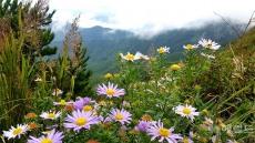 천상의 화원 소백산에 가을 야생화 활짝...떠나는 여름꽃도 마지막 손짓