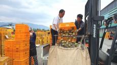 포항시, 예비비등 4억7000만원 투입 태풍 피해 낙과 '긴급 수매'