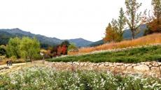 국립백두대간수목원, 가을에 물들다...가을꽃 개화 언택트 축제연다