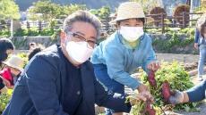 고구마 수확 너무 재밌어요 ...울릉군 슬로푸드 어린이농부학교 텃밭 체험활동