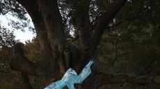 쌍산 김동욱,영덕 700년수령 당산나무앞에서 코로나19 퇴치 당산제 올려