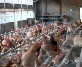닭에서도 DDT 검출…사용금지 농약 '사람 몸에는?'