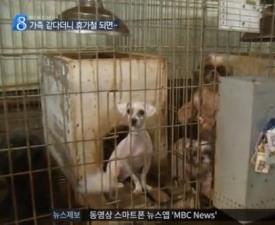 [펫스타의 명과 암] ②학대부터 오지랖까지… 상처받는 반려인과 동물들