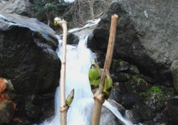 [포토뉴스]울릉 섬에 찾아온`봄의 교향곡