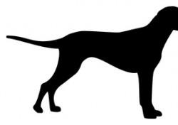 """영국 외무부 """"한국 개고기 거래 중단되도록 압박할 것"""""""