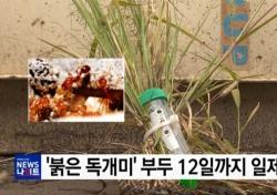 '붉은 독개미' 비상 당국 조치는? 불안감 가중