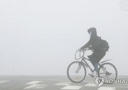 [네티즌의 눈] 자전거 타고 횡단보도 건너다 사고, 여론 반응은 운전자 vs 자전거 이용자