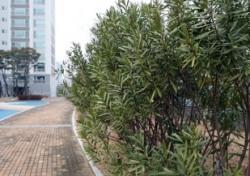 협죽도, 목숨 앗을 수 있는 맹독성 나무 아파트에 심은 의도가?
