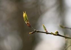 [책 잇 수다] 나무·꽃…식물이 품은 비밀