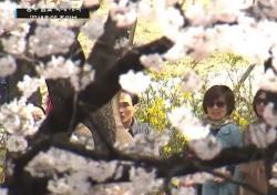 '2018 여의도 벚꽃축제' 주차 꿀팁..다른 문제는?