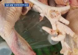 썩은 닭발이 우리 입 속으로…책임 떠넘기기 급급한 생산업체·도매상