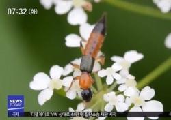 화상벌레, 모기 잡듯이 때렸다간 된통 당한다…물릴 시 대처법과 예방법은?