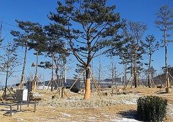 김천시, 일반산업단지주변 미세먼지 차단숲 조성…소나무, 느티나무 등 8400여 그루 심어