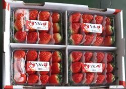 김천 딸기 러시아 수출 올해 첫 시동…설향 340박스 선적