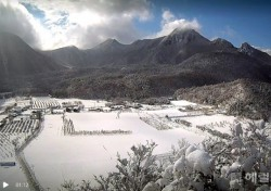 우수, 눈이 녹는다는데…울릉도 폭설로 주민불편, 여객선 나흘째 통제