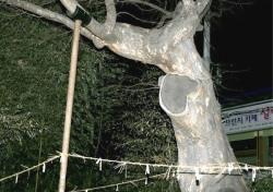 코로나19 물리치소서....정월대보름날 700여년 이어온 안동부 신목제사올린다