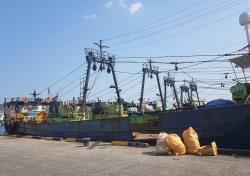 포항해경, 불법 공조조업 으로 오징어 잡은 60대 트롤 선장 첫 구속