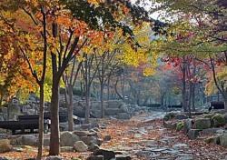 달성군 비슬산 자연휴양림, 추석연휴 정상 운영