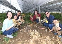 영주풍기인삼축제, 다양한 비대면 온라인으로 개최
