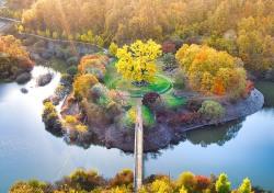 천연기념물 안동 용계리 은행나무 이식 27년 만에 80% 회복…임하댐 건설로  15m 올려 심어