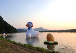 경북 상주 경천섬에 '낙동강 오리알' 이 나타났다