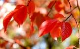 A feast of colors -- autumn in Seoul