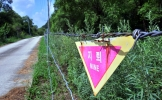 DMZ Peace Park: wildlife paradise at the Cold War's last frontier