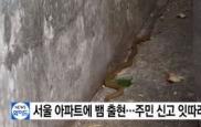 서울 방배동 아파트에 1m 뱀 출몰