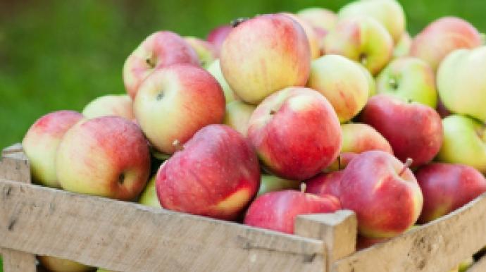 [리얼푸드]남아도는 국산 사과, 베트남산...