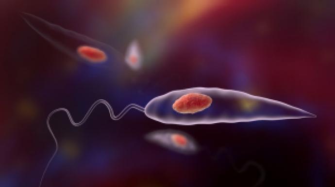 '살 파먹는' 육식 기생충, 전 세계로 퍼진...
