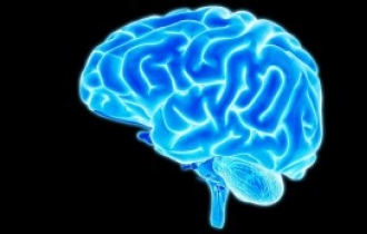 Korean researchers discover link between brain size, functionality