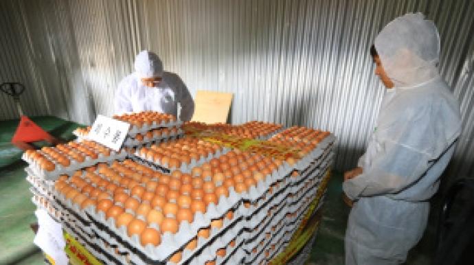 Egg crisis escalates as contamination discoveries continue