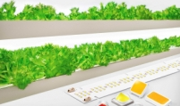 Samsung unveils new horticulture LED products