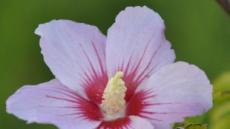 나라이름-꽃-색깔...역사적 혁명 이름 어떻게 짓나