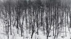 裸木에 스민 흰눈의 정령…정갈한 '내안의 나'