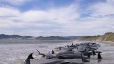 뉴질랜드서 해안서 107마리 고래 떼죽음