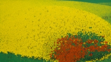 현란한 꽃…넘실거리는 바다…조부수 원색의 필치로 돌아오다