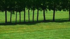 아, 봄날…초록 물결 가슴에 일렁인다
