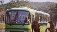 누적입장객수, 1억6000만명…국민 1인당 3회꼴 방문...동물 기록왕, 새끼 16마리 낳은 25세 기린이 '다산왕'