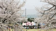 안산 제일CC, 17일 전 홀 개방해 벚꽃축제 개최