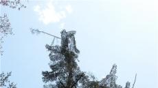 한반도 자생수종 '풍산가문비 나무' 복원 식수 행사