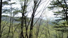 [박인호의 전원별곡]제3부 전원일기-(9)전원생활 백배 즐기기…동네 뒷산 산책엔 뭔가 특별한 '맛'이 있다