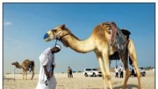 중동의 매력 함께 맛보는 유럽여행…'카타르항공'의 즐거운 서비스