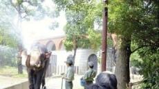 日 폭염속 '코키리 코 샤워' 인기
